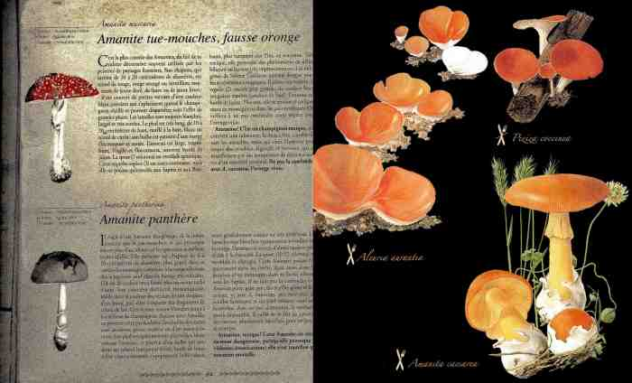 pages intérieures champi2